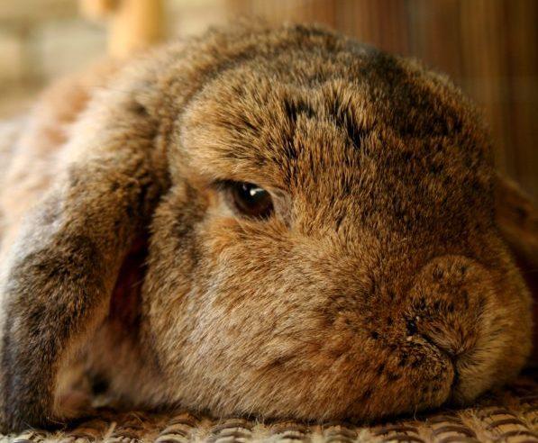 Heeft een konijn een soortgenoot nodig?