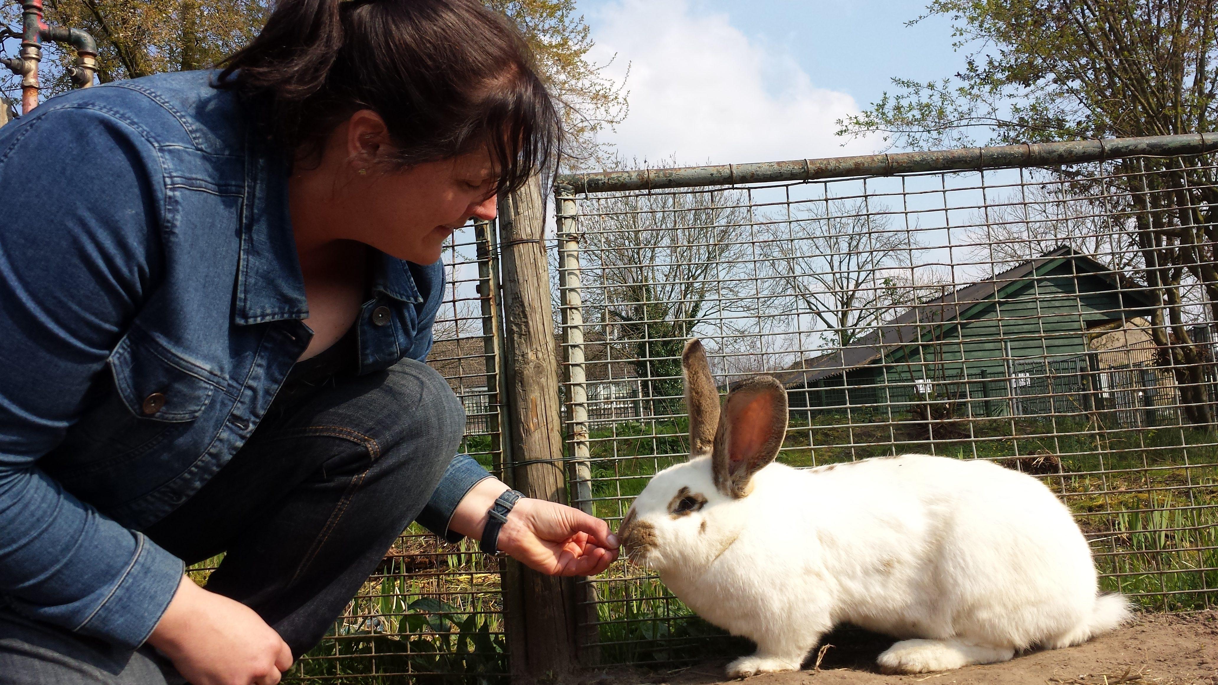 De wereld via de konijnenneus