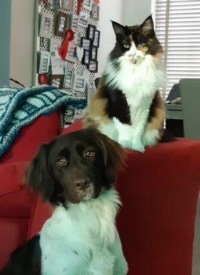 Hond en katten aan elkaar laten wennen