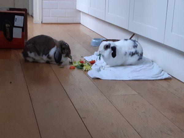 Koppeling konijnen Piraat en Lilly