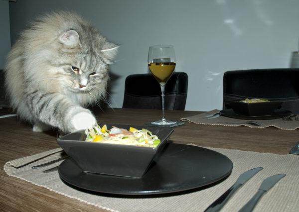 Bedelgedrag bij katten