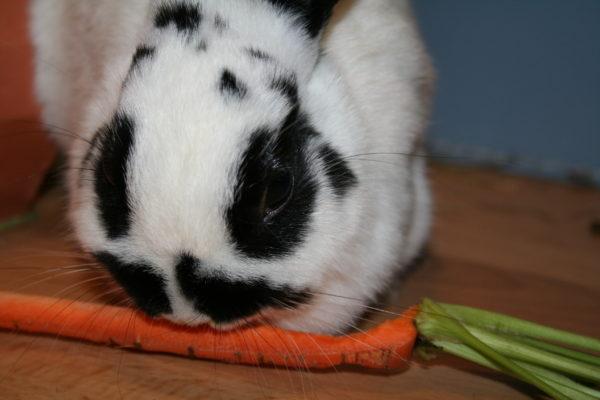 Konijnengeluk: een fijn leven voor je konijn