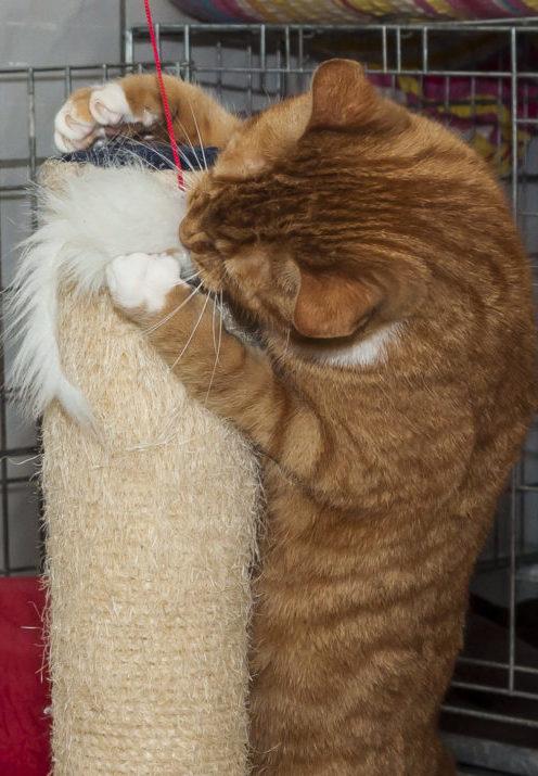 Kat wil niet spelen