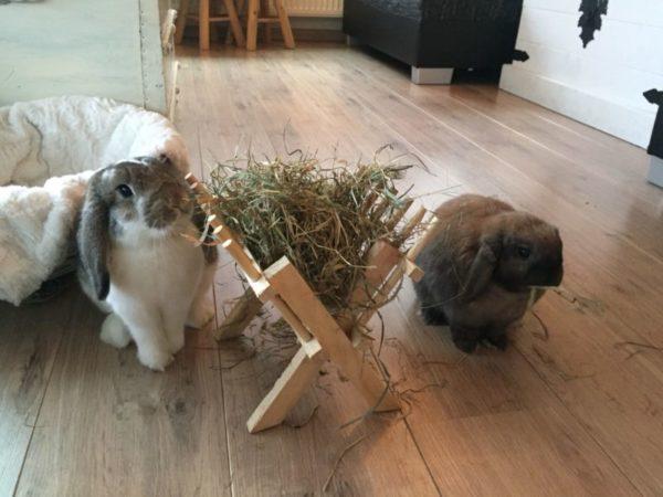 Onze konijnen hebben ruzie