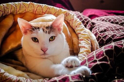 kattenoog gevoelig is voor de kleuren blauw en geel