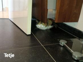 Agressie tussen onze katten