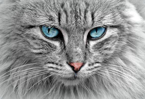 Verhuizen met een kat die snel gestresst is